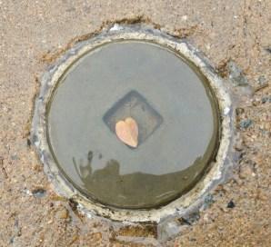 heart leaf on sidewalk