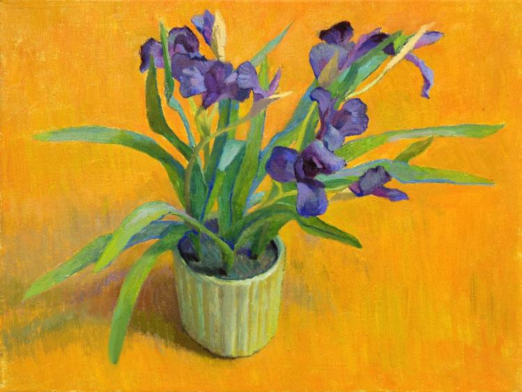 Ari Targownik, Irises, 16x12 Inches