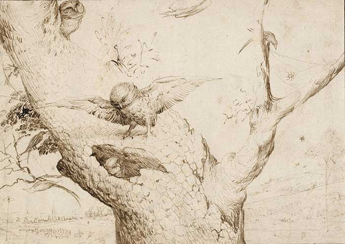 The Owl's Nest, Pen and Bistre on Paper, Hieronymus Bosch, Circa 1505-1516