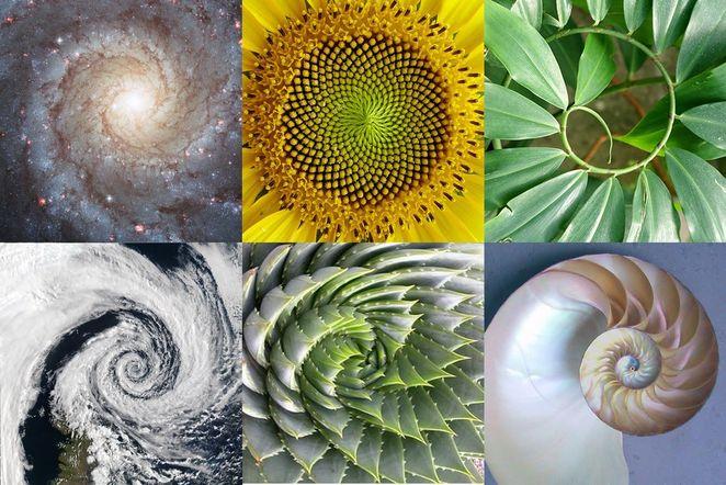 Nature - Fibonacci Spiral