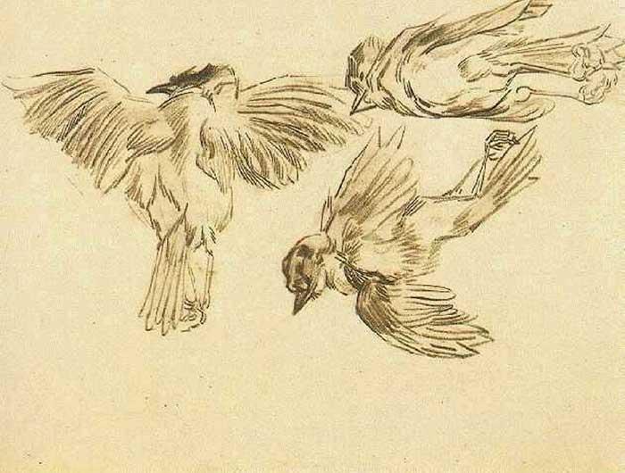 Vincent van Gogh, Studies Of A Dead Sparrow, 1885