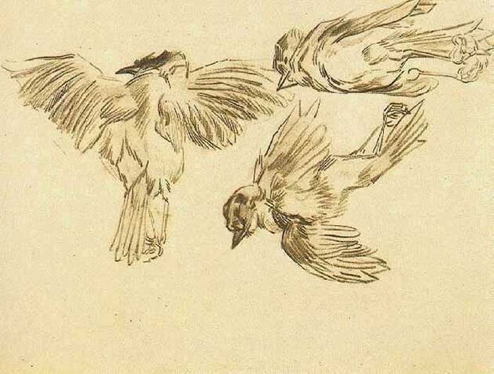 Vincent van Gogh, Studies Of A Dead Sparrow, 1885