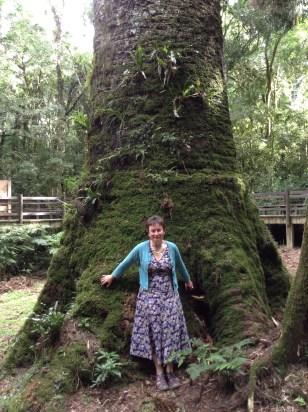 Me standing next to a 700 year old Auricaria Angustifolia (Pinheiro Brasiileiro)