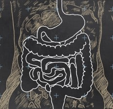 Human Digestive System Chalkboard Illustration