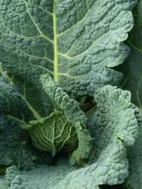 green kale, vegetable leaf