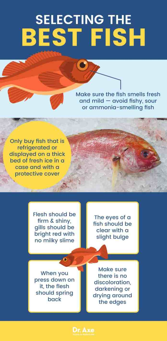 Is rockfish good or bad for your health body grain for Does frozen fish go bad