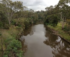 Looking west down the Yarra adjacent to Lenister Farm Wetlands.