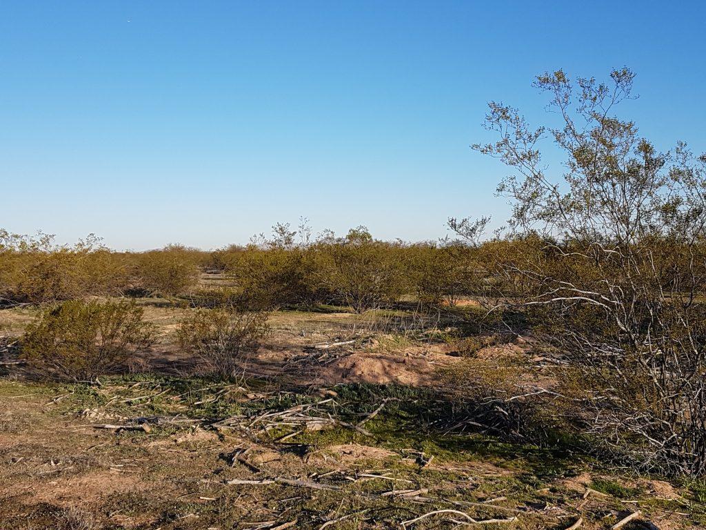 Barren desert land with scrub grass and dried ground