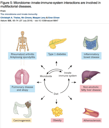 microbiome - innate - immune system interactions are involved in multifactorial diseases