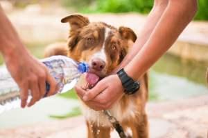 dog, helping dog, thirsty dog-2982426.jpg