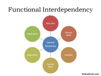 neck function interdependent