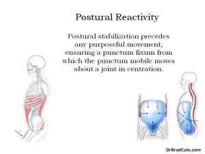 postural reactivity