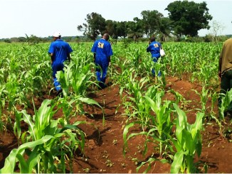 Agriculture in congo DRC