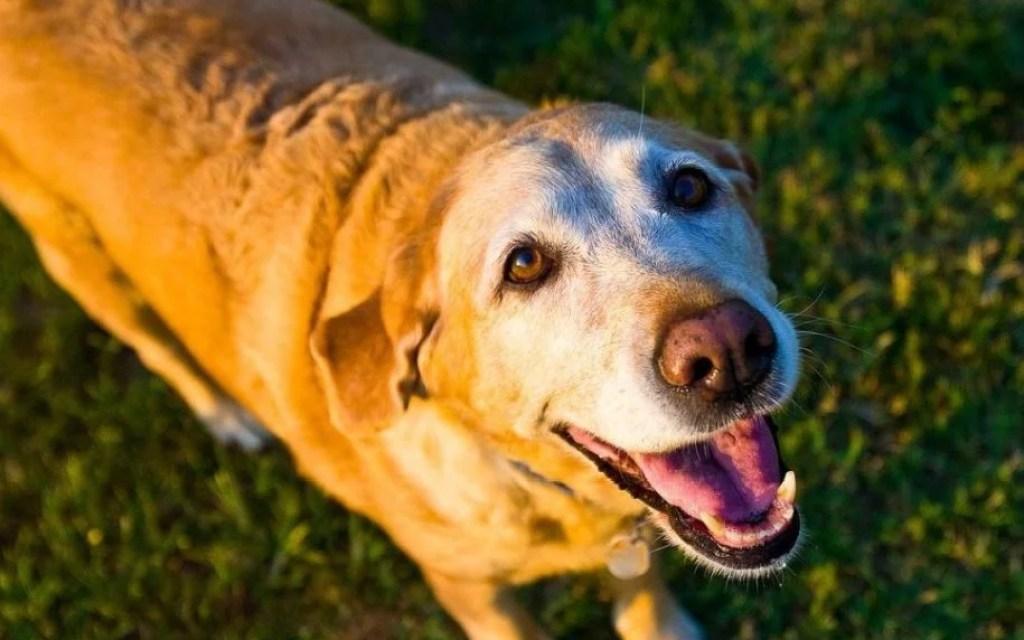 old-dog-1582205_1280-1080x675