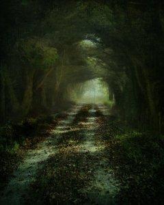 follow_the_light_by_frozenstocks