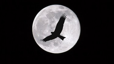 Birds flying through the moon at night, dark