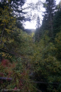 Dense vegetation along North Pigeon Creek