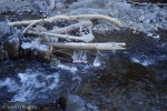 Ice-blobs on Quartz Creek