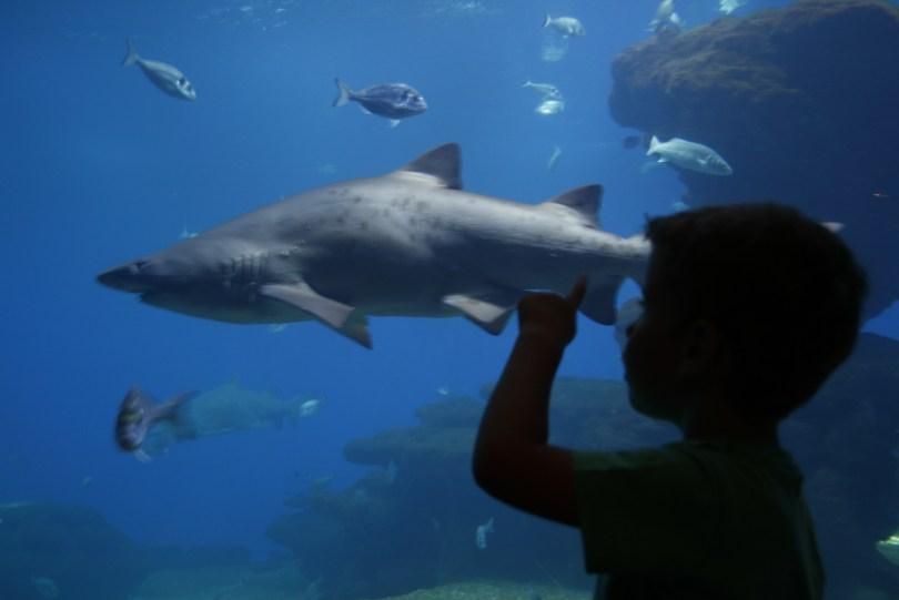 Kind mit Hai im Palma Aquarium