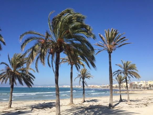 Palmen El Arenal Mallorca