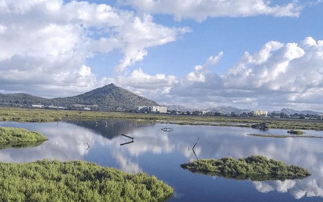 Naturschutzgebiet s'Albufera - Mallorca