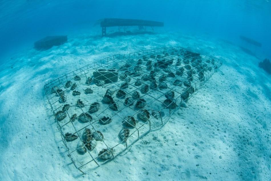 Aitutaki underwater clams
