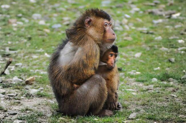 cute-animals-monkeys-young-large