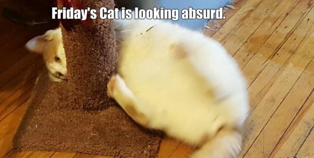 5. Friday's Cat