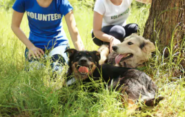 Picture of high schools students volunteering in a park with dogs.  They have the word volunteer printed on their shirts.