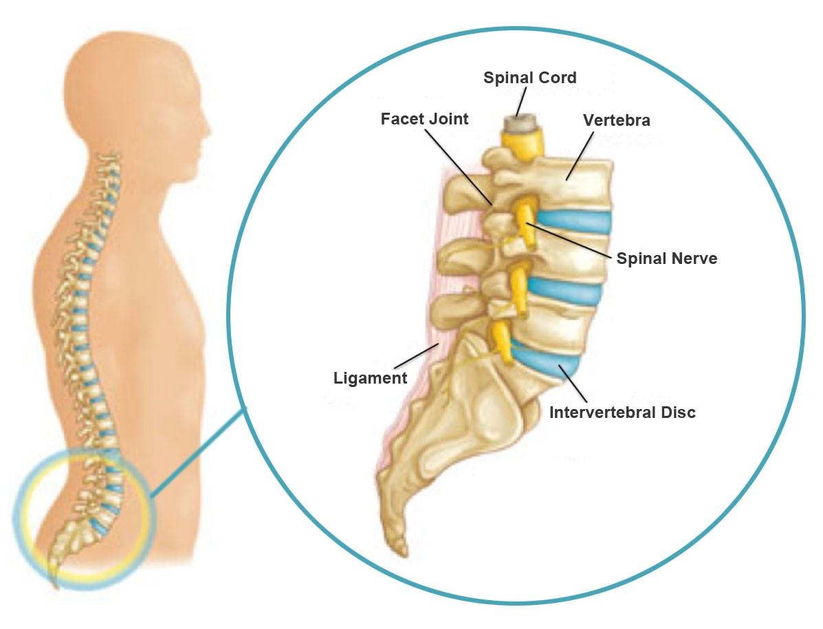 Massage Therapy Pain Diagram Wiring Diagram Master Blogs