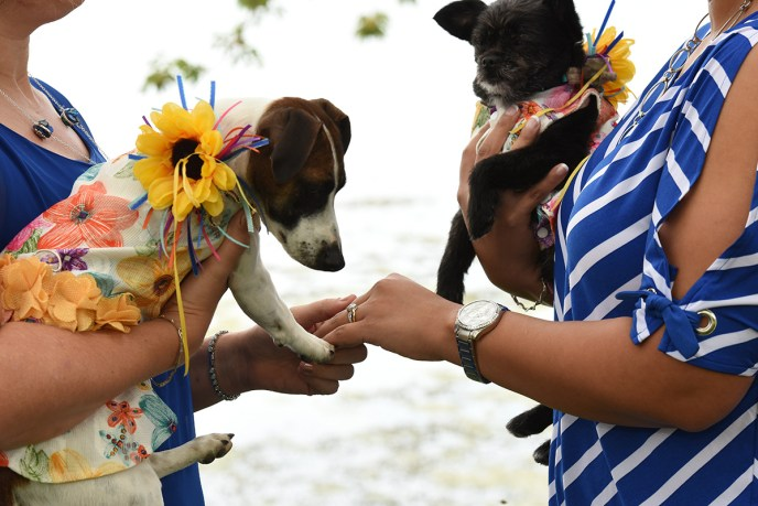 a wade''s bayou lgbt wedding with dogs