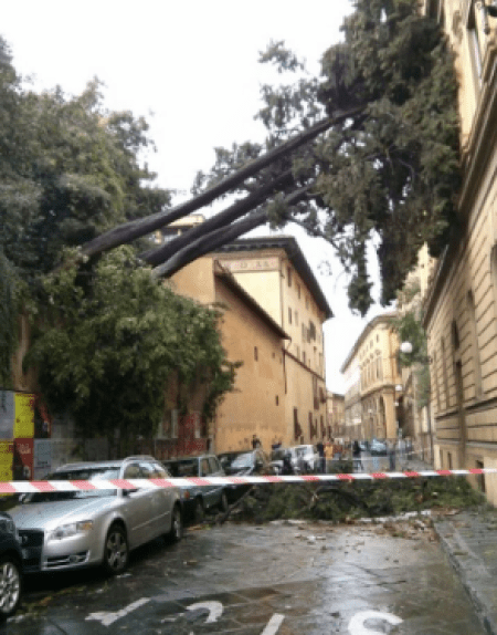 Trees down in Florence