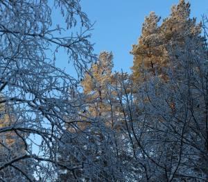 Snowy trees, from The Gratitude Attitude on dreamdolove.com