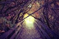 beautiful-photography-random-tumblr-favim-com-679530