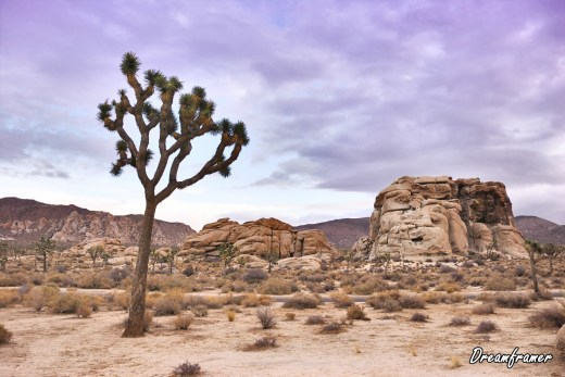 Joshua Tree - ©Dreamframer