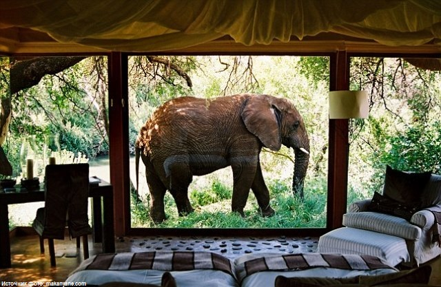 Отель Makanyane Safari Lodge, Южная Африка