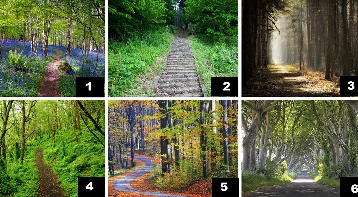 The Path You Choose Describes Your Personality and Fortune
