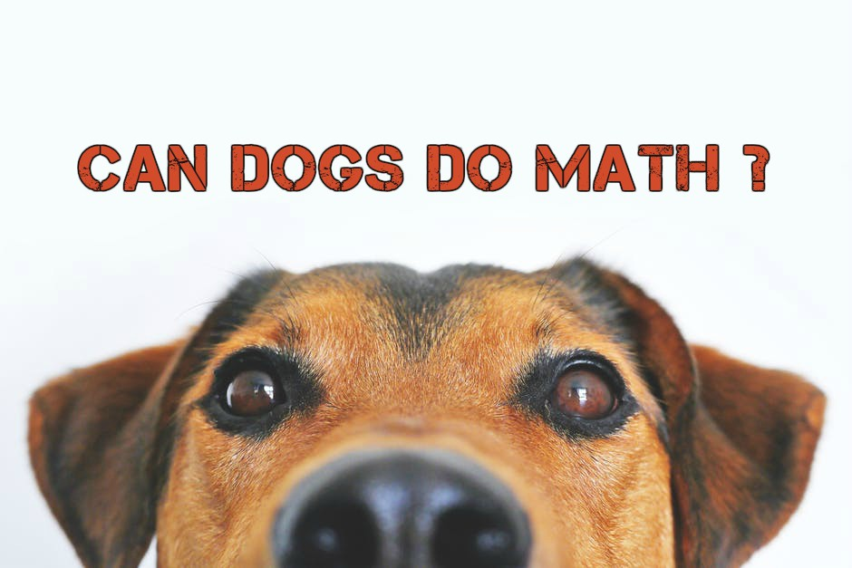 Can Dogs Really Do Simple Math?