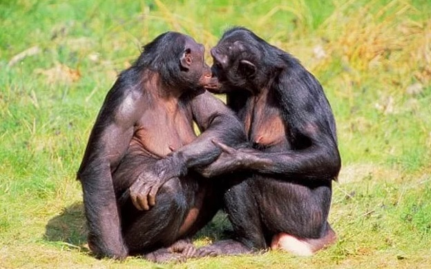 A Very Tough Response From The Nature To The Stereotype 'There Is No Homosexuality In Animals'