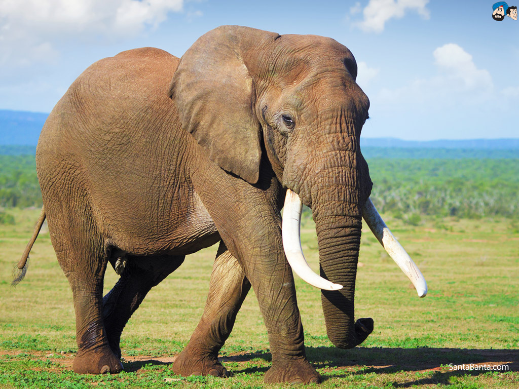 Image result for elephant pictures