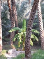Al Ain Oasis 10