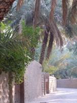 Al Ain Oasis 11