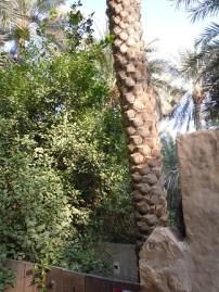Al Ain Oasis 14