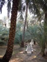 Al Ain Oasis 18