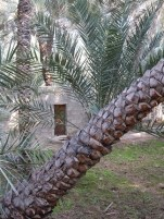 Al Ain Oasis 25