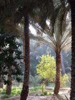 Al Ain Oasis 28