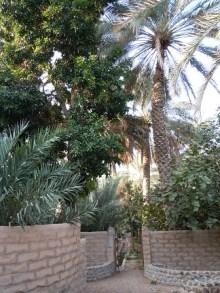 Al Ain Oasis 5