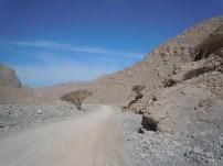 Wadi Ghalilah 14