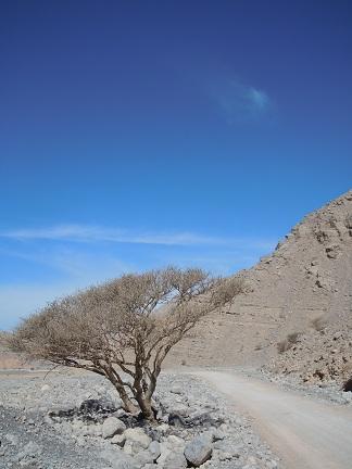 Wadi Ghalilah 16