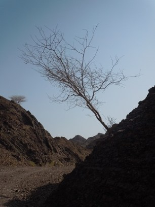 Wadi Kub 10